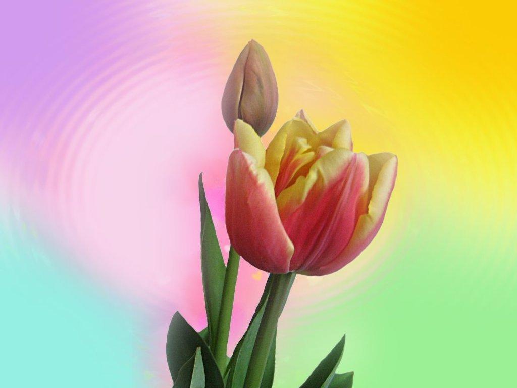 Десктоп тапети с пролетни цветя и
