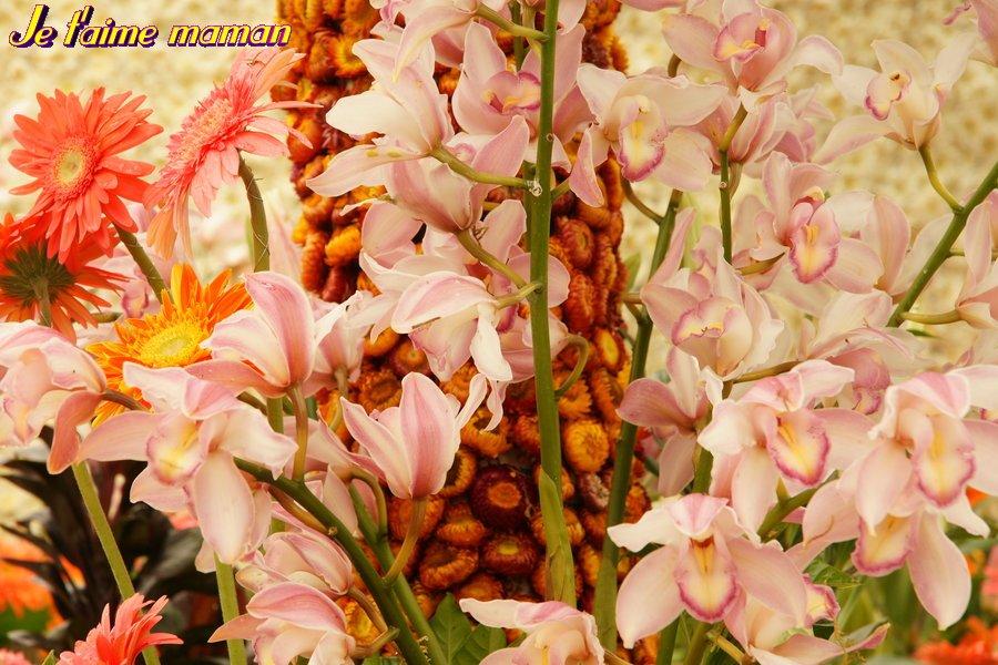 Belles Fleurs Fete Des Meres Cartes Fleurs Gratuites