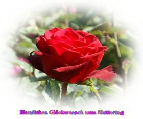 Muttertag's Grusskarte bunte Rosen aprikose, pfirsich, rosa, rot, weiss *Alles Liebe zum Muttertag*