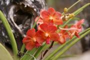 Muttertags Blumen eCards