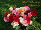 Muttertags Rosenstrauss Grusskarten
