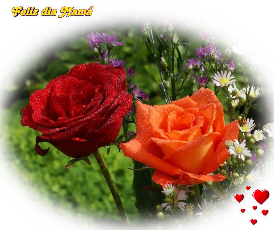 Postales Dia De La Madre Rosas Hermosas
