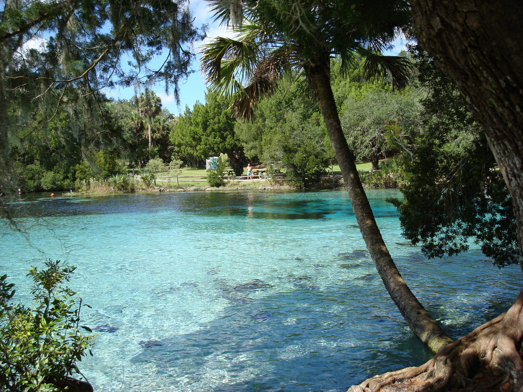 Silver glen springs florida ocala and silver springs for Image de fond