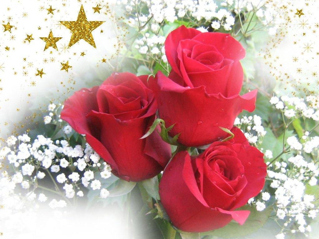 De Rosas Rojas