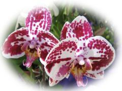 Beautiful Orchids - couple - ecard