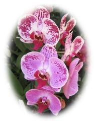 Beautiful Orchids ecard