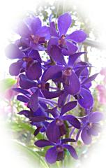 Beautiful Blue Orchid ecard