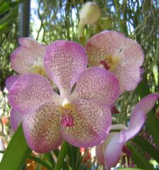 Beautiful Pink Orchid ecard