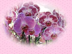 Beautiful Pink Orchids ecard
