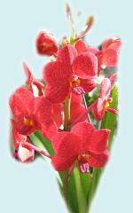 Beautiful Orchid ecard
