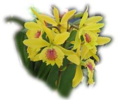 Beautiful Yellow Orchid ecard