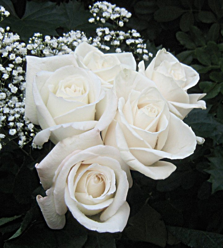 nouvel an 2009 White_roses_3626
