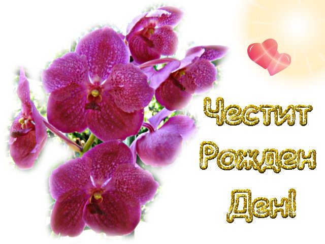 4RD_lilavi_orhidei.jpg