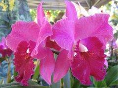 Поздравителна Картичка с Орхидея