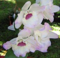 Поздравительная Открытка - Красивая Орхидея