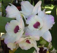 Поздравителна Картичка - Красива Орхидея