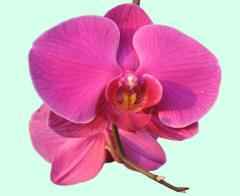 Виртуальная Открытка - Красивая Орхидея