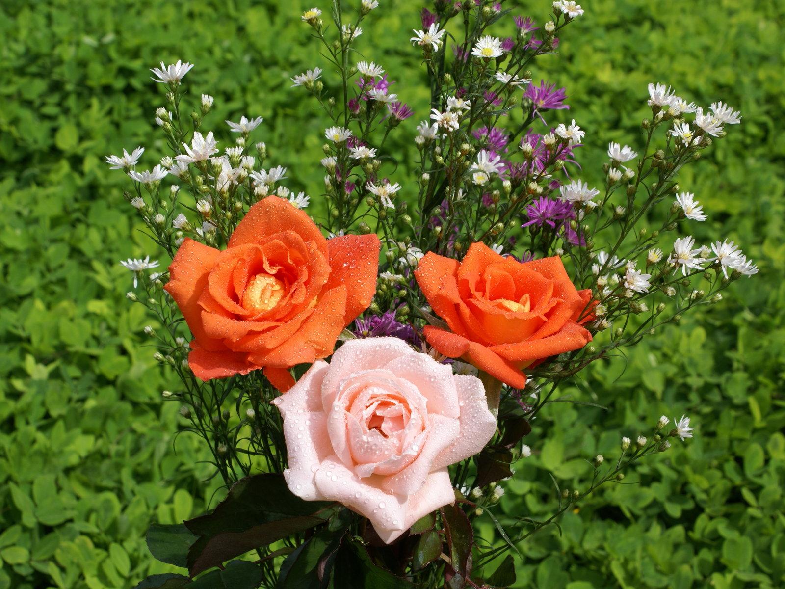 Hintergründe tropische rosen