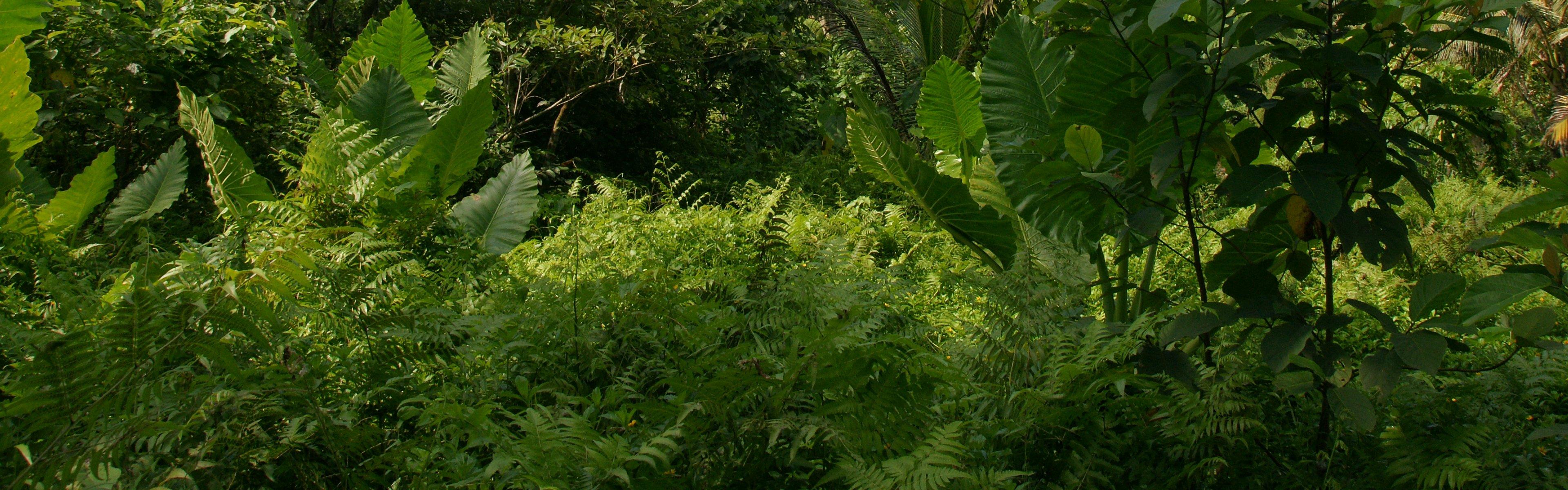 Dschungel Hintergrund