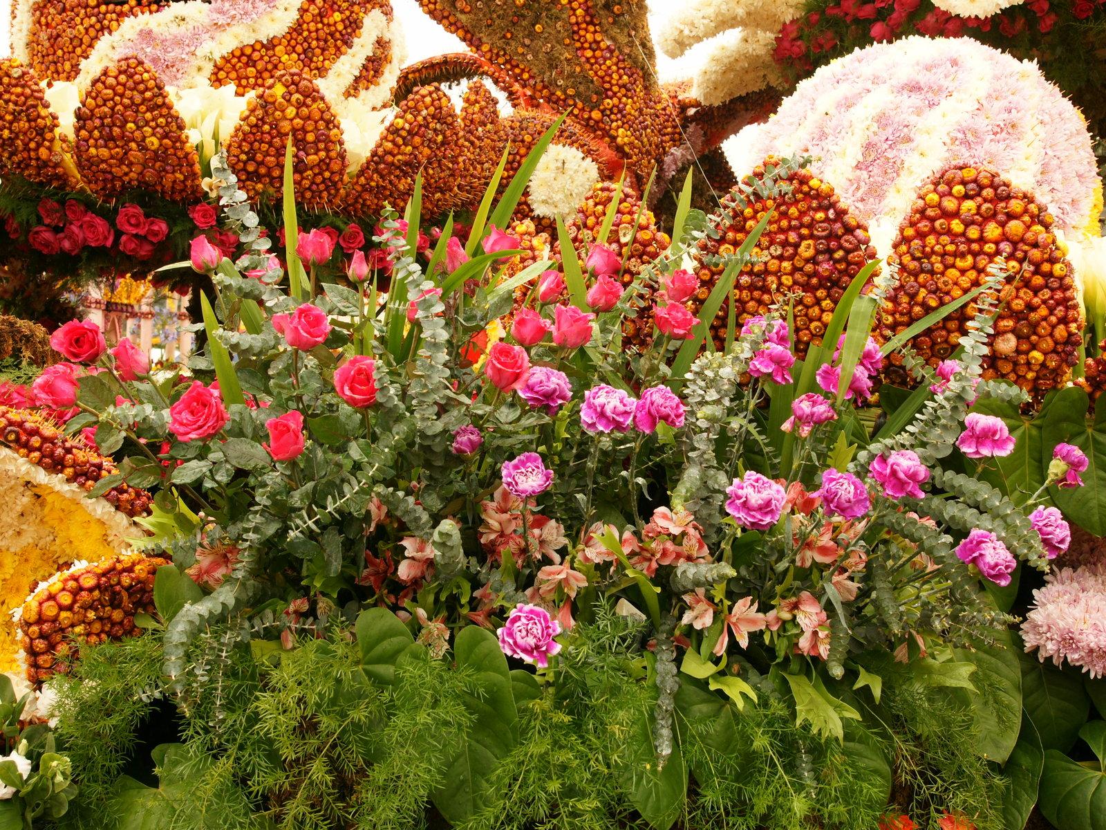 Blumen Bilder Blumenausstellung Philippinen