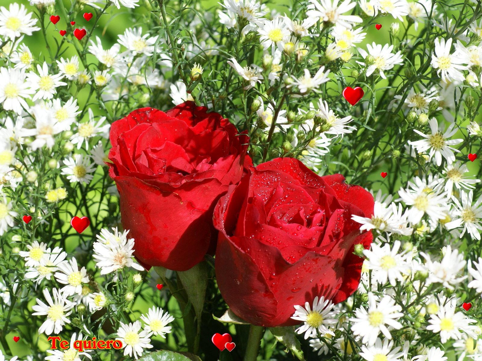 Fondos De Amor Fondos Corazones Y Rosas Amor