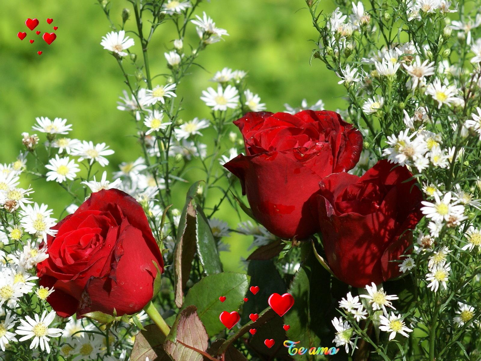 Fondos corazones y rosas amor