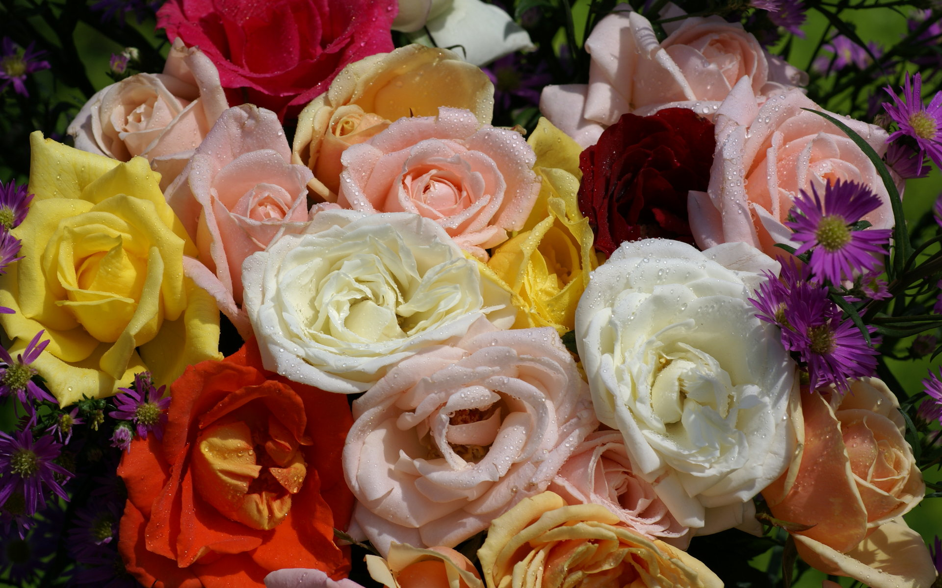 Rosas - Rosas rosas hermosas ...