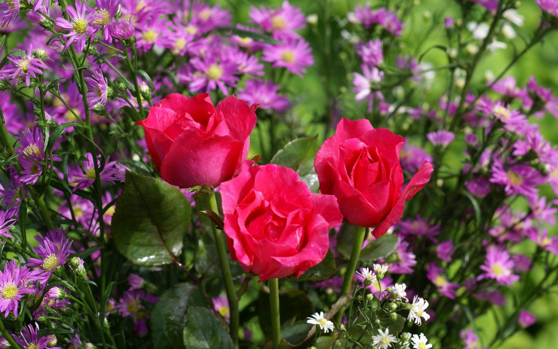 Fotos de flores, rosas, paisajes para fondos de pantalla