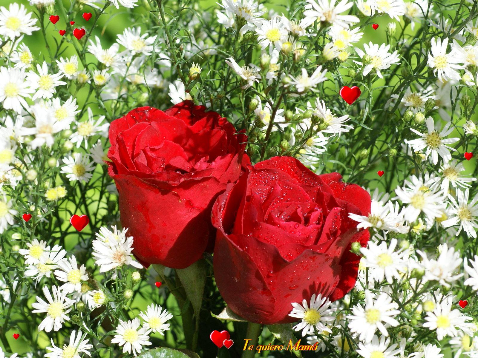 Fondos dia de la madre - Rosas rojas