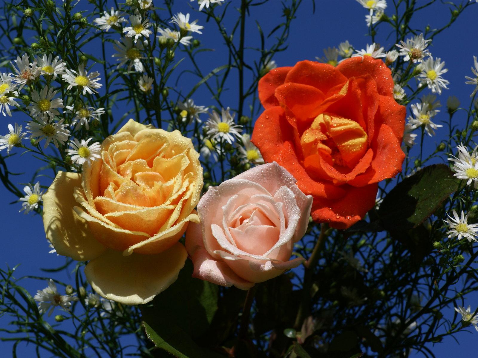 Flores - Fondos Flores - Fondos de Pantalla - Imagenes