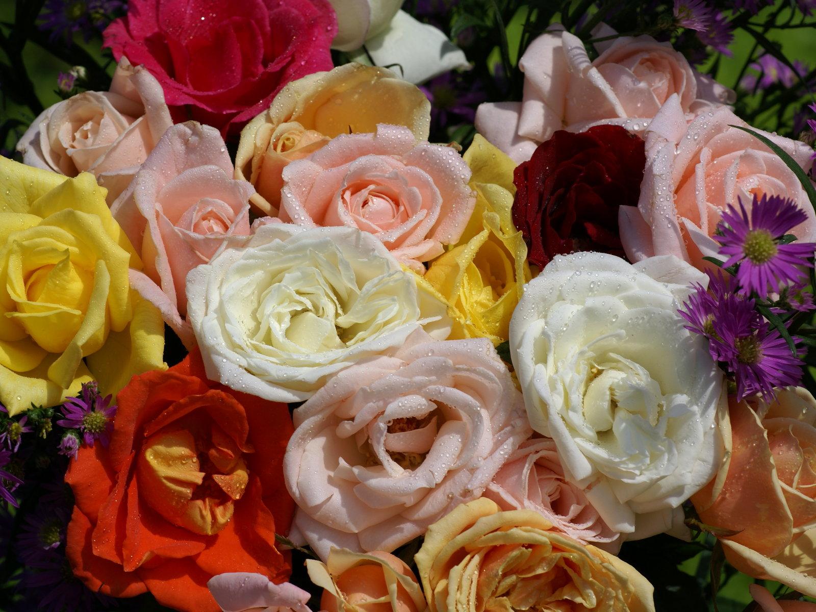 Rosas hermosas fotos rosas m s bellas fondos de pantalla - Ramos de flores bonitos ...