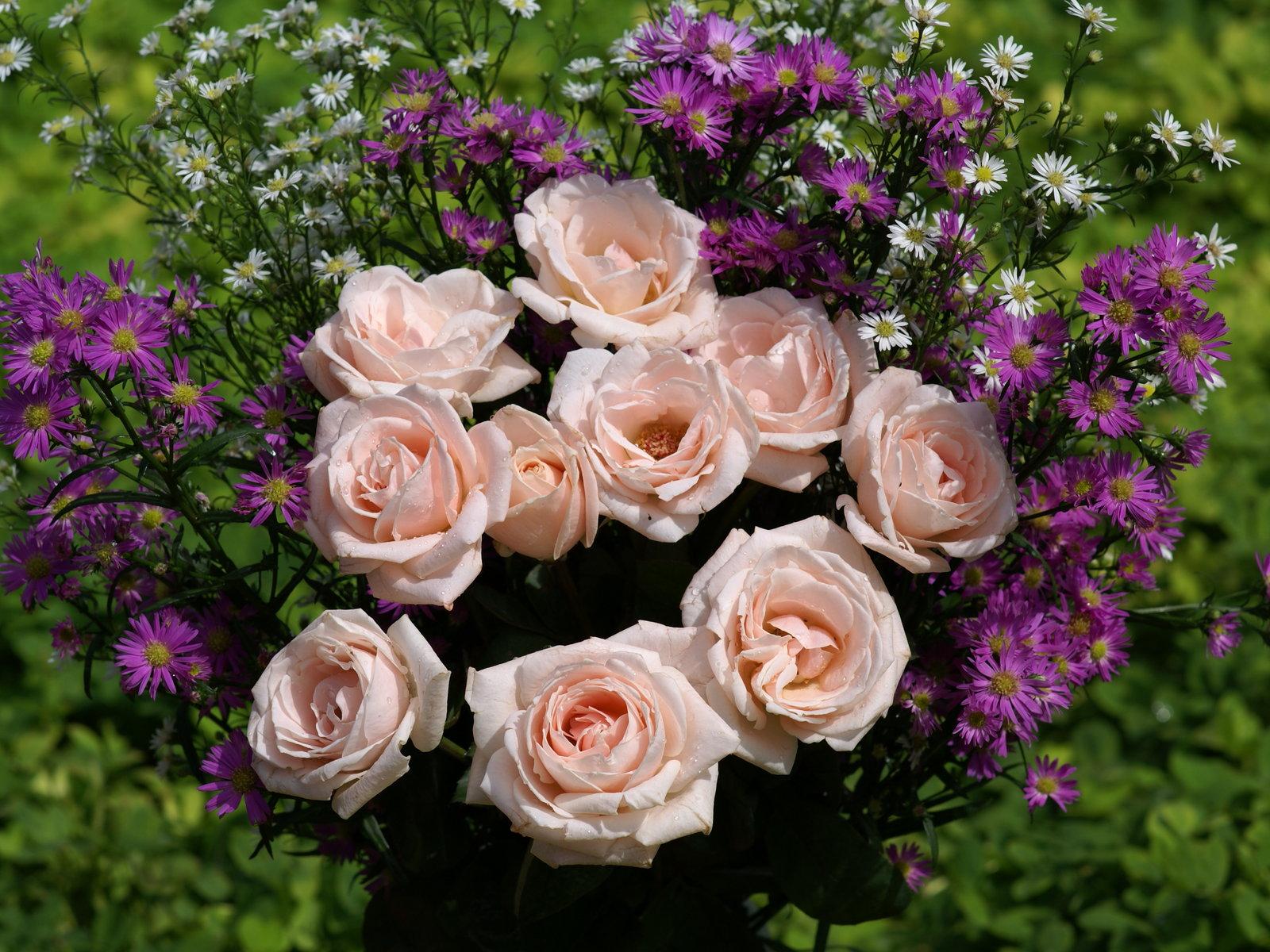 Image gallery las rosas mas bonitas for Imagenes bonitas para fondo de pantalla