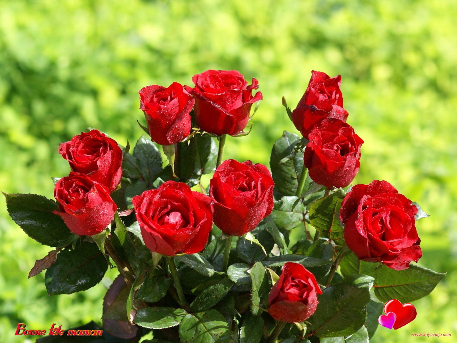 F te des m res fond cran roses et fleurs for Fond ecran rose