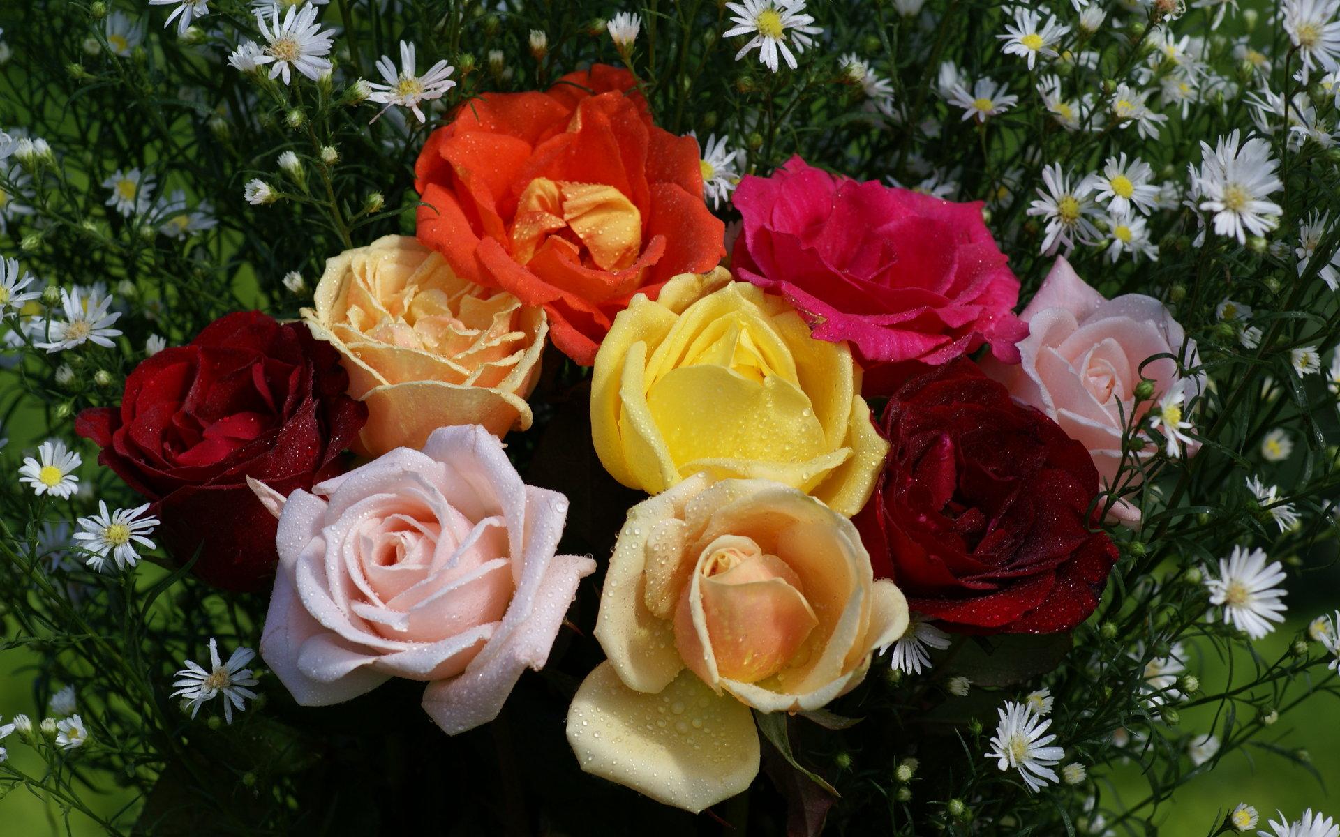 """Résultat de recherche d'images pour """"Jolies roses"""""""