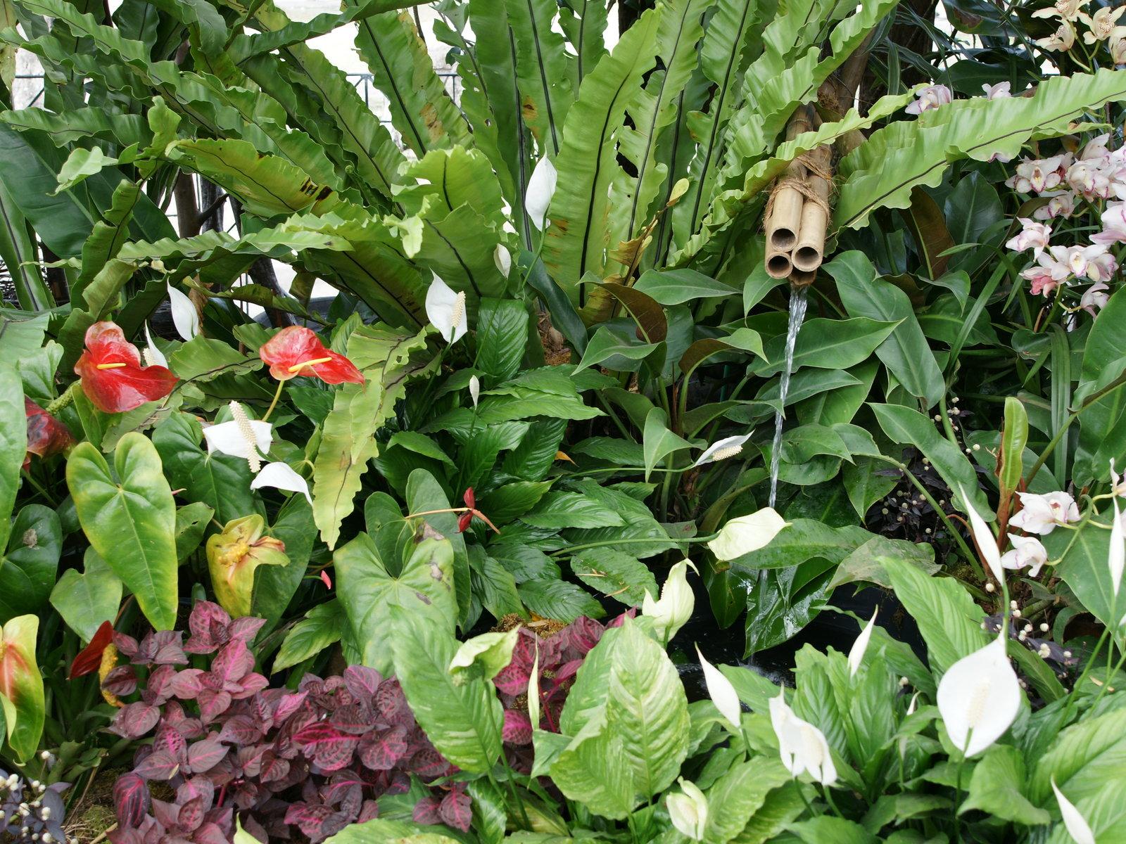 Jardin fleurs tropicales for Plantas tropicales de exterior