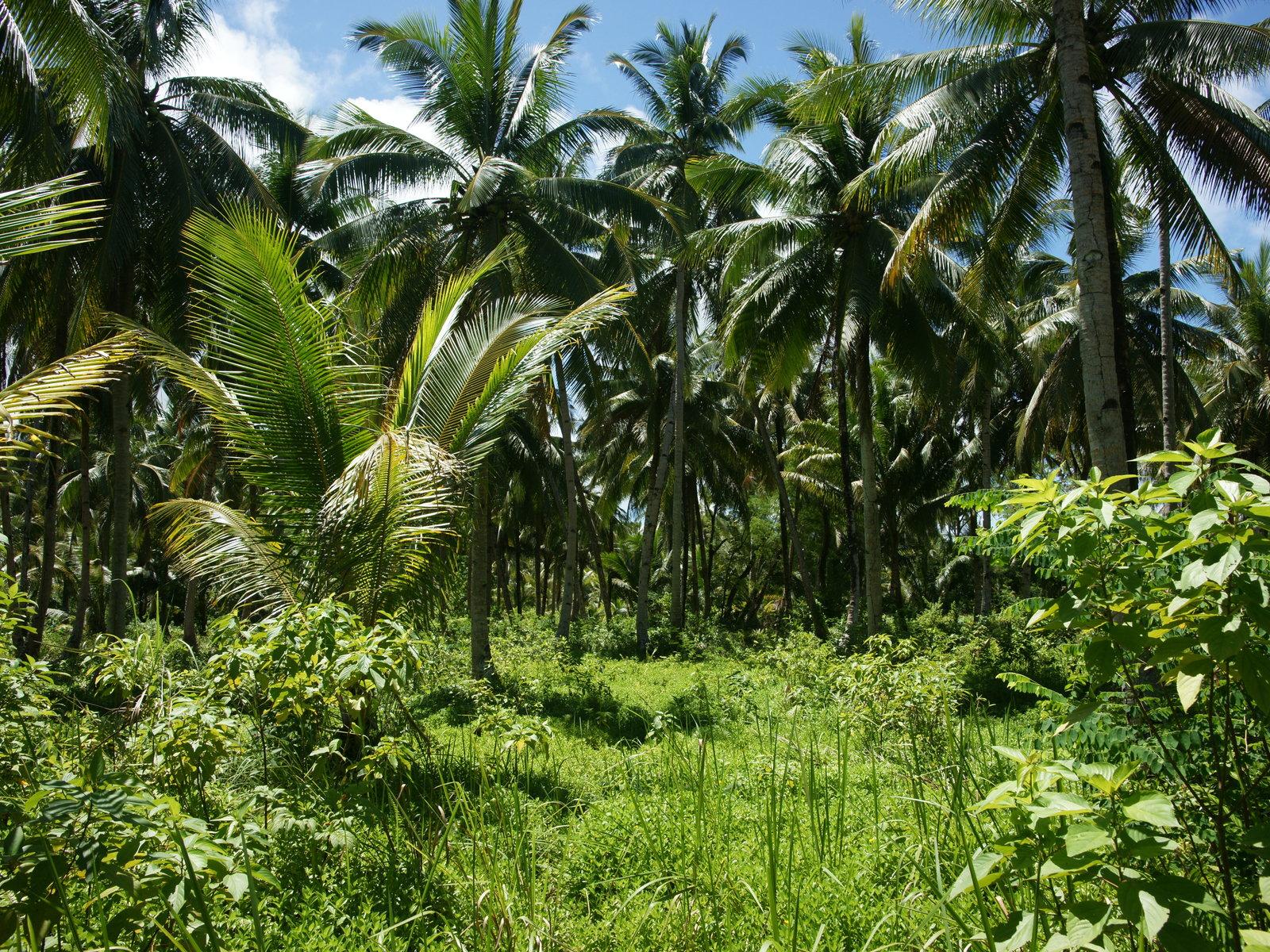 Green Lush Tropical Island