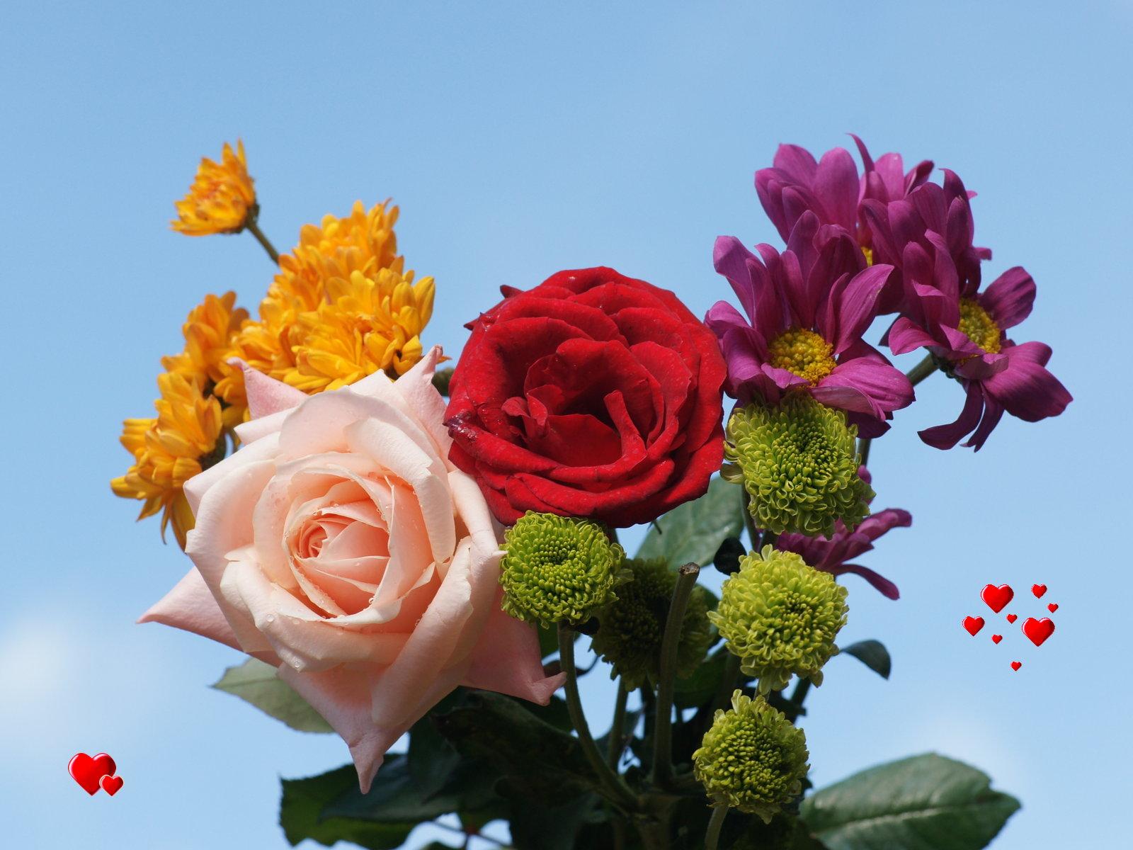 Love wallpaper - Valentine roses