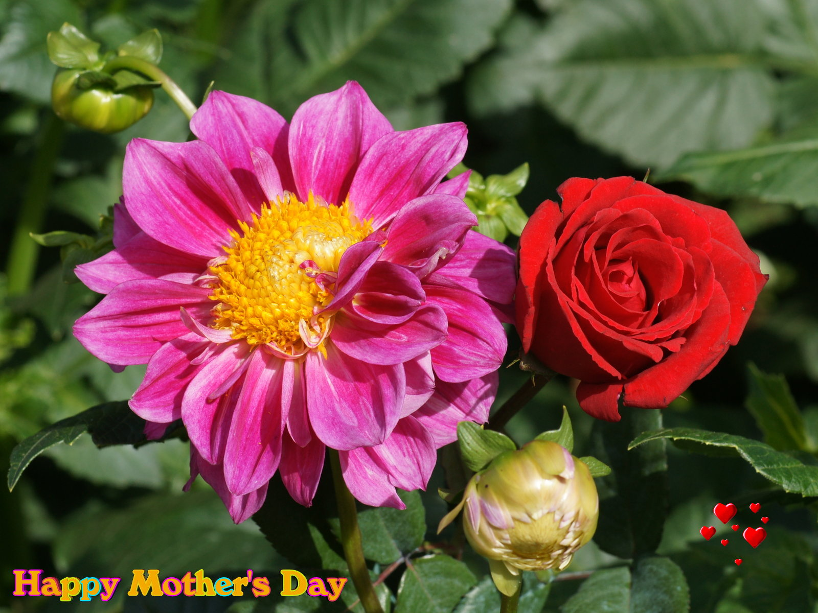 Mothers day wallpaper beautiful flowers
