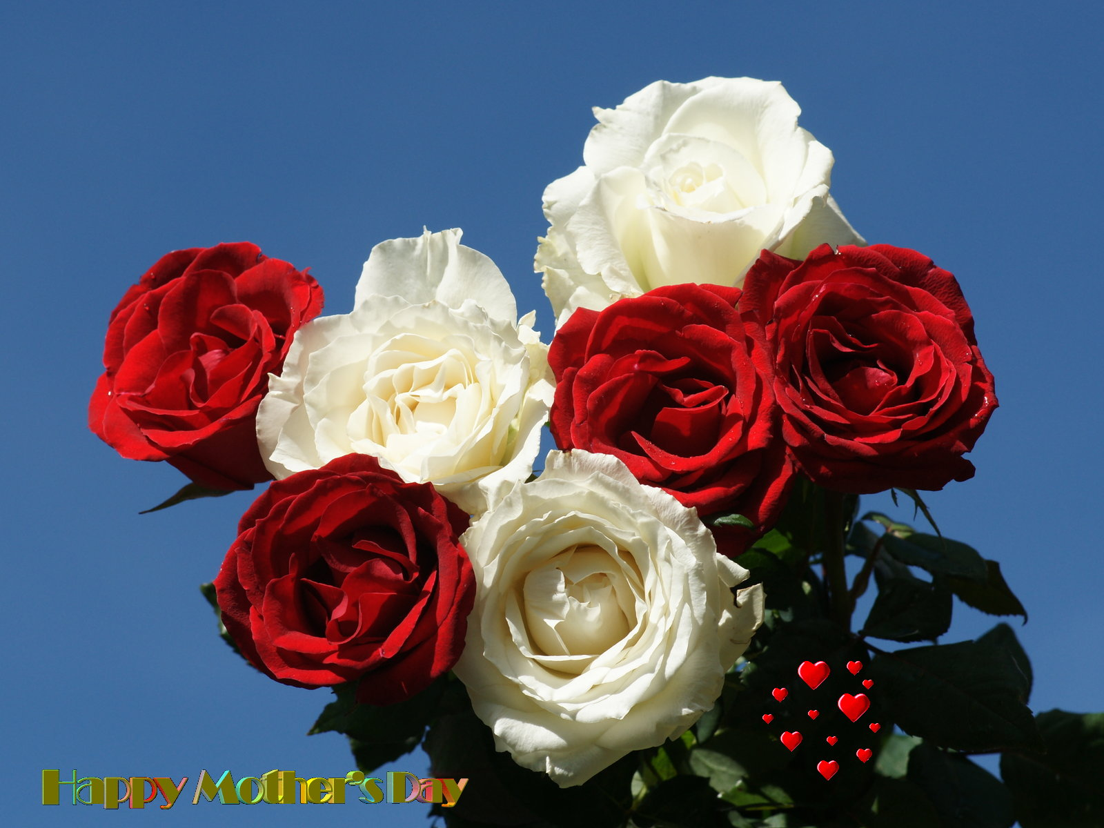 Mothers day wallpaper beautiful flowers beautiful red and white roses izmirmasajfo