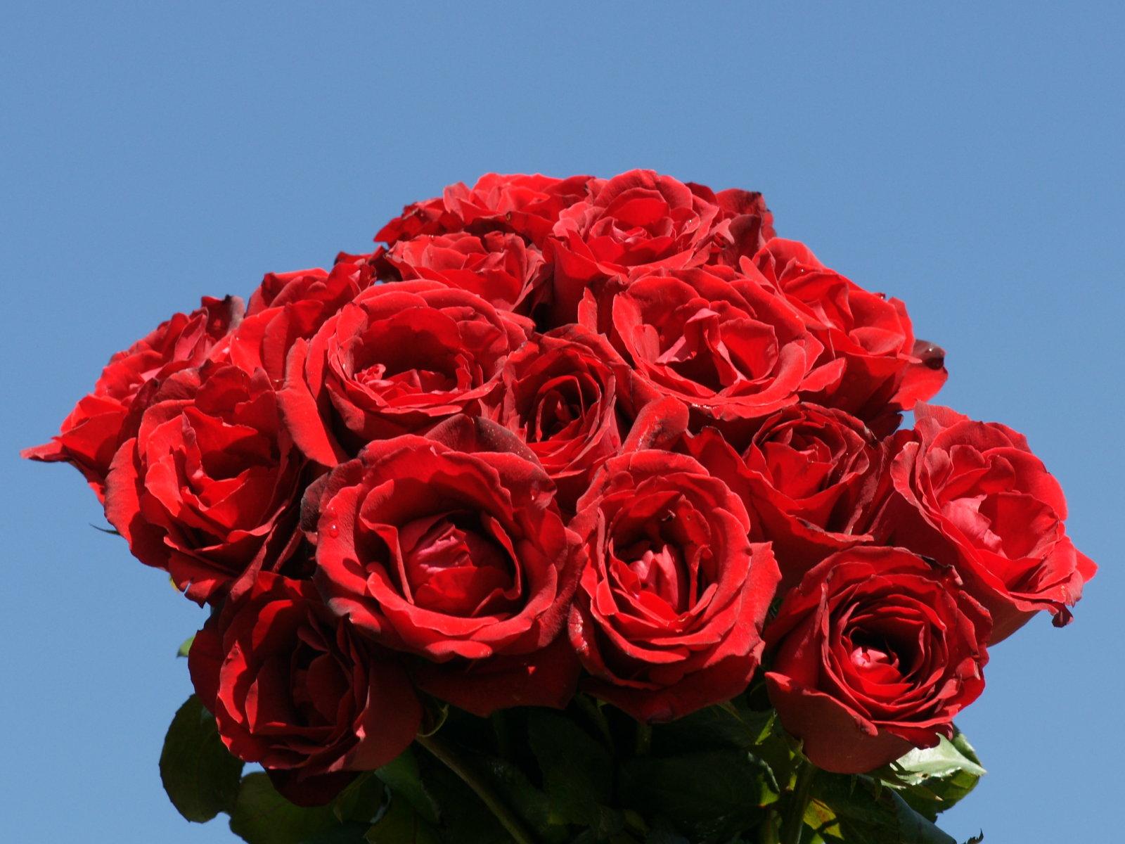 Ramo de rosas con un osito de peluche. Ideas para regalar.