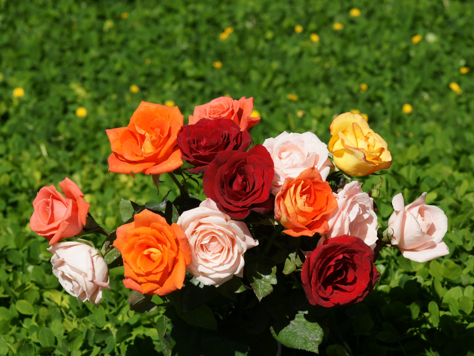 Beautiful Roses Bouquets