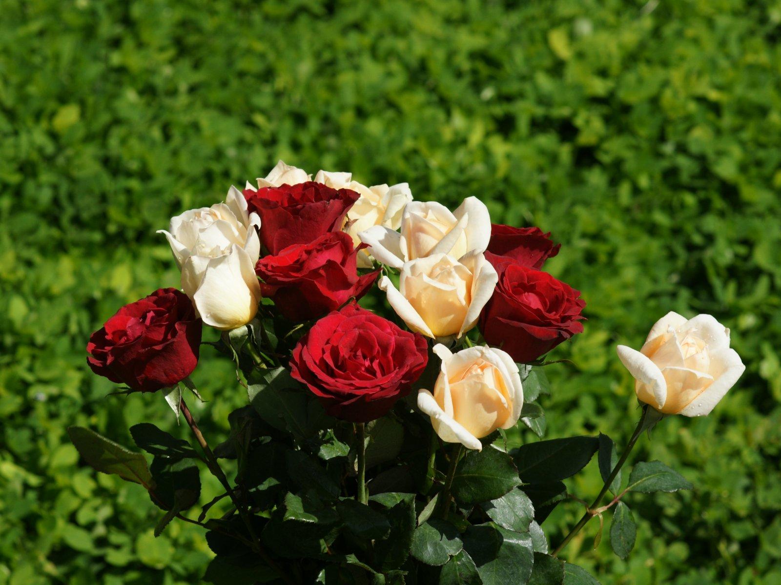 Bouquets de roses fonds d 39 cran grand bouquet de roses - Image bouquet de roses gratuit ...