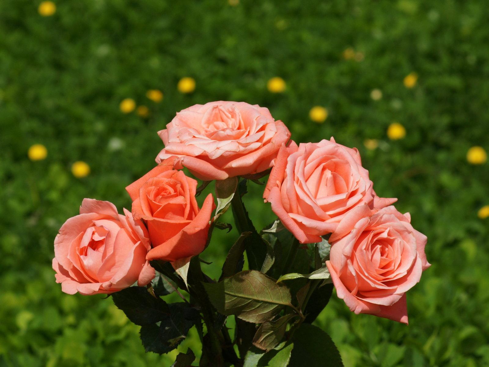 ramo de rosas fondo de escritorio