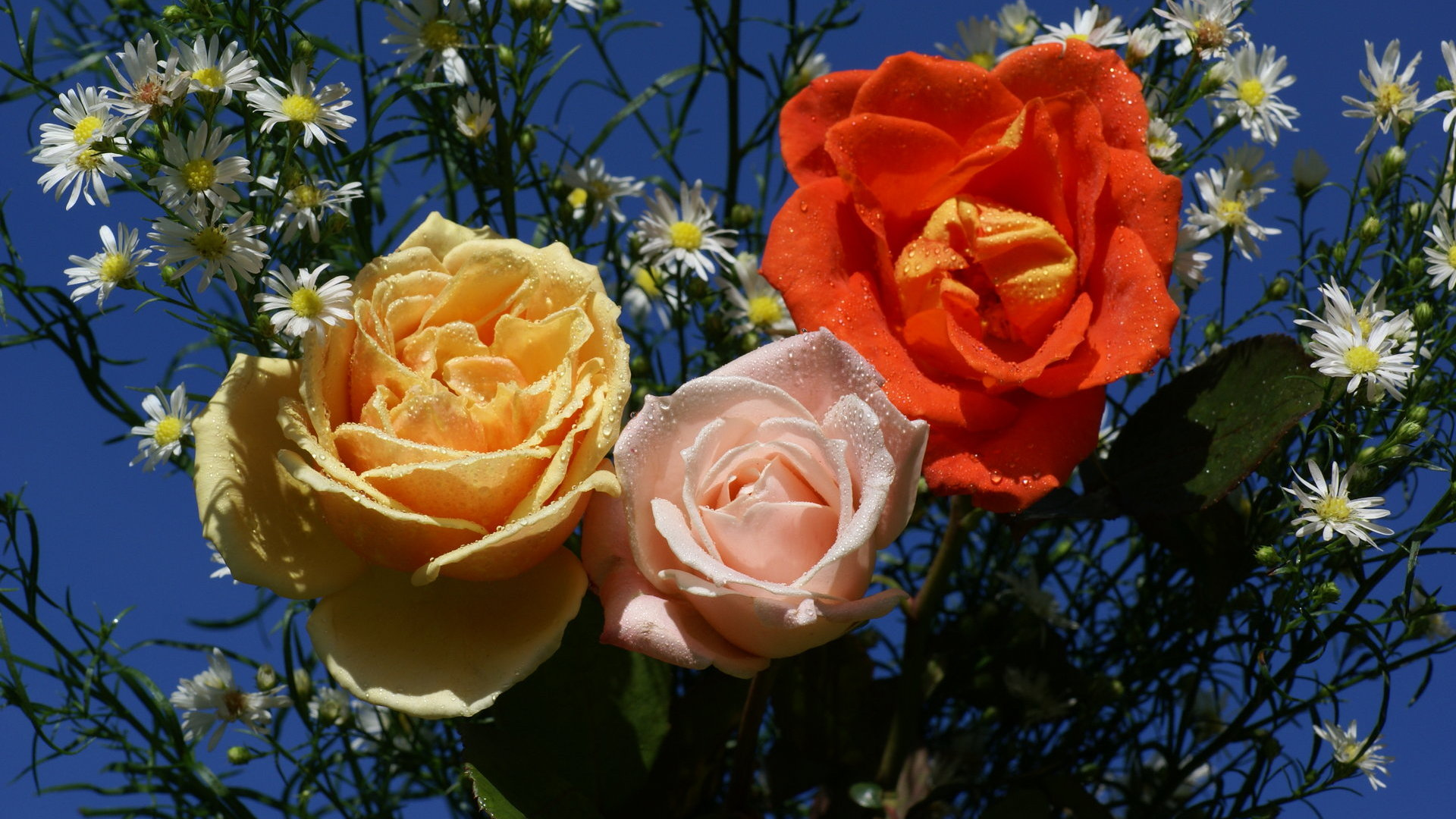 http://www.allabouthappylife.com/wallpaper/widescreen/roses/colorful_roses-dsc01617.jpg