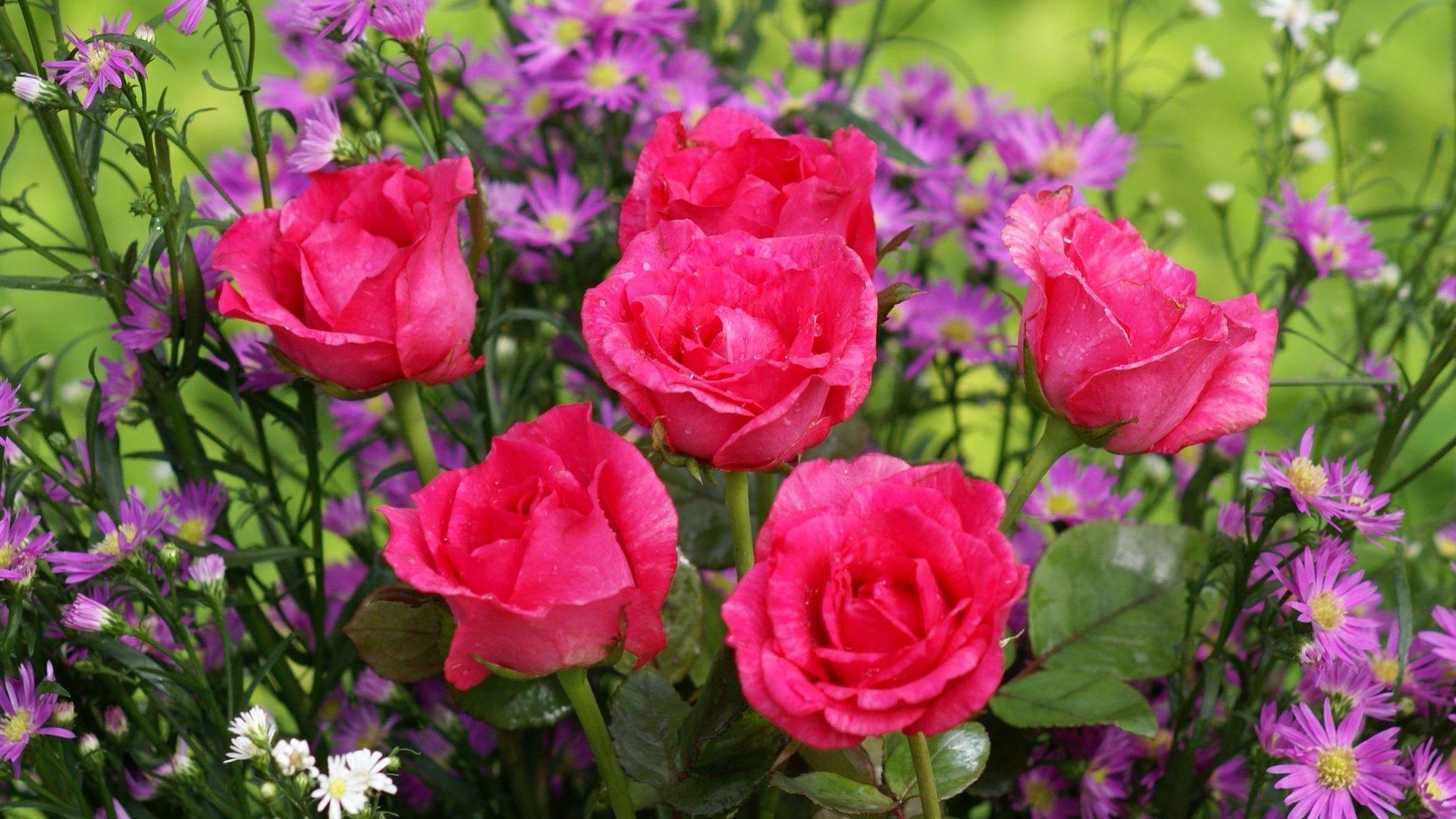 Résultat d'images pour belles roses rouges