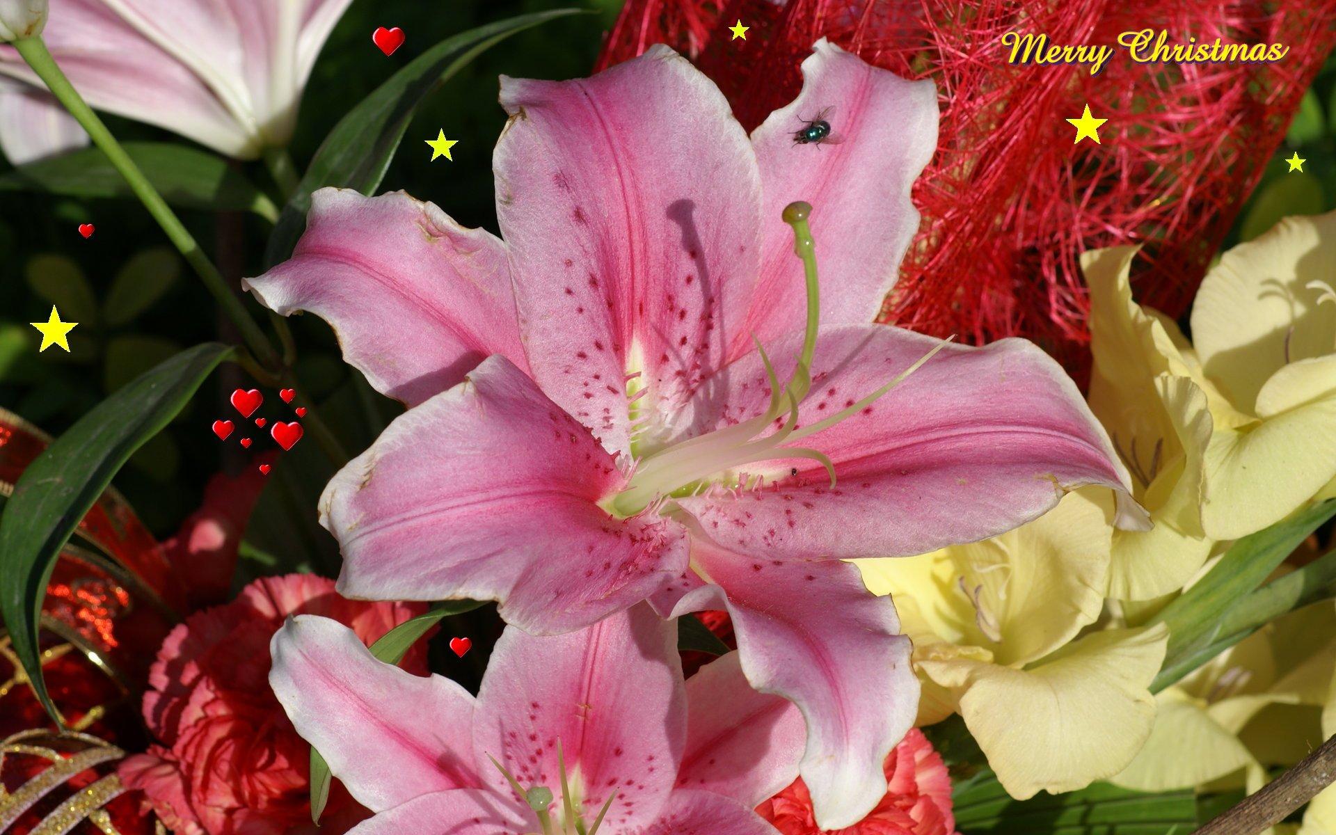 widescreen christmas wallpaper christmas flowers
