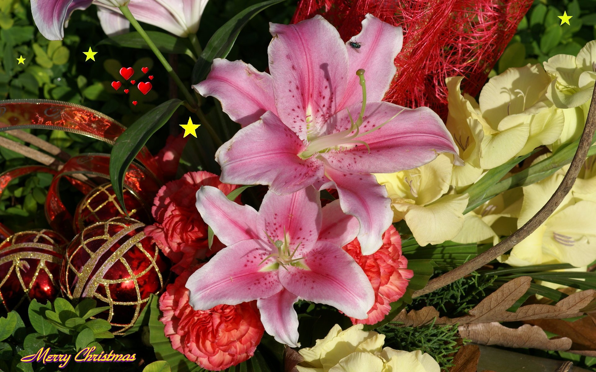Christmas widescreen wallpapers flowers