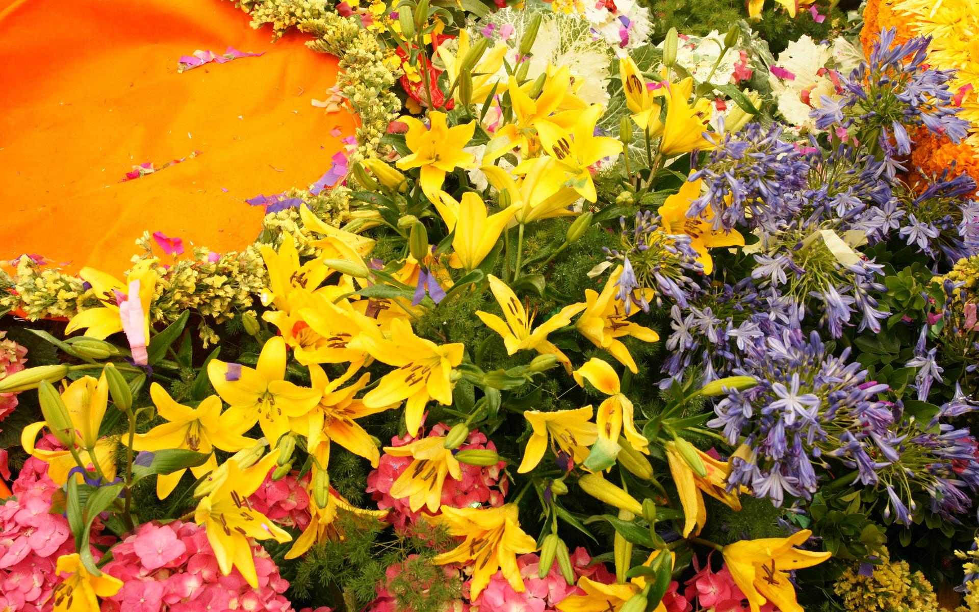 Flowers In Bloom Widescreen Wallpapers