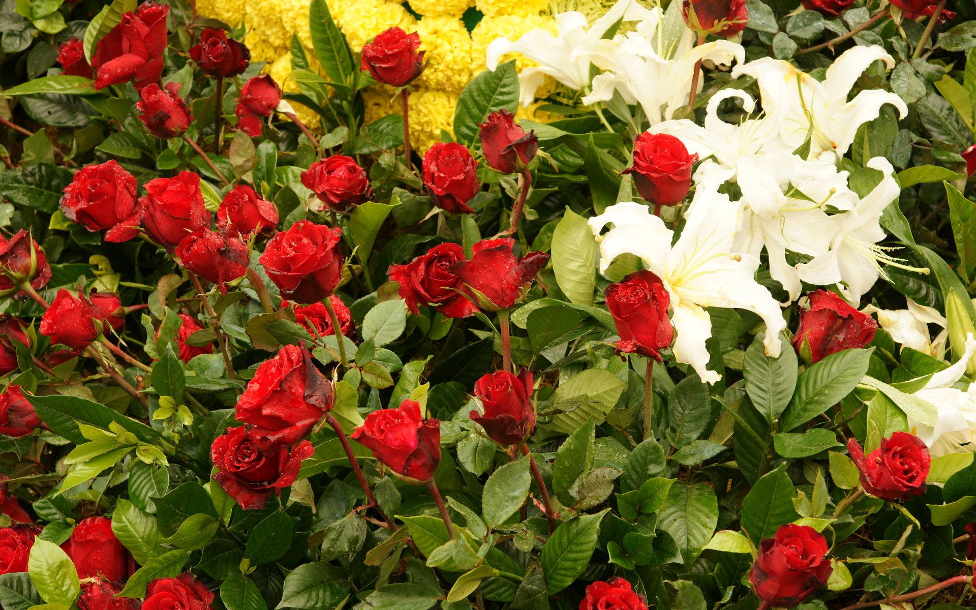 blossoming flowers widescreen wallpaper