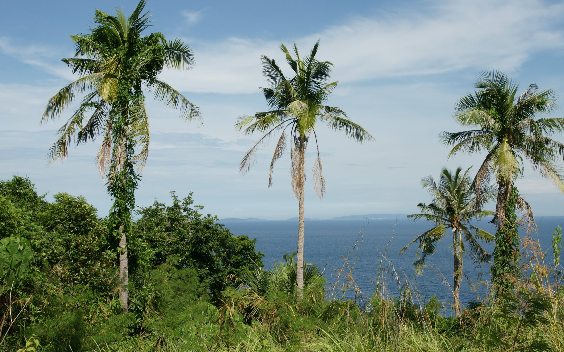 Palm trees  ocean view